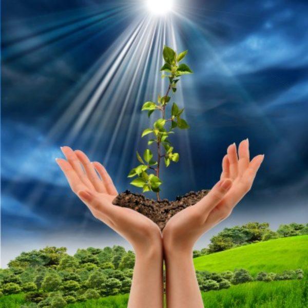 sanar la tierra