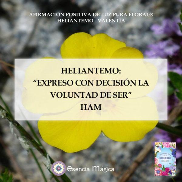 heliantemo ham afirmación positiva de Luz Pura Floral