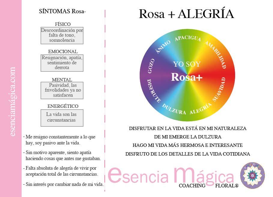 tarjeta cualidades luz pura floral rosa