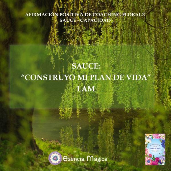 Afirmación positiva de Luz Pura Floral. Sauce-Capacidad
