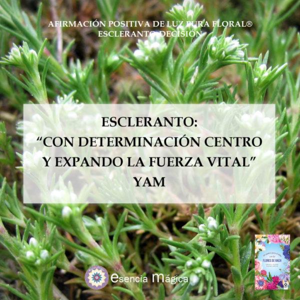 ESCLERANTO YAM