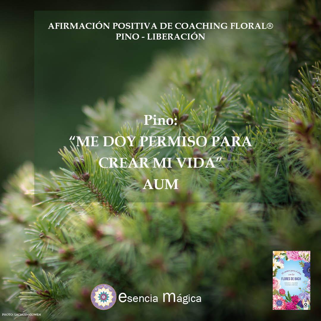 Afirmación positiva de Luz Pura Floral. Pino-Liberación