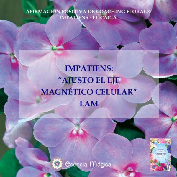 Afirmación positiva de Luz Pura Floral. Impatiens-Eficacia