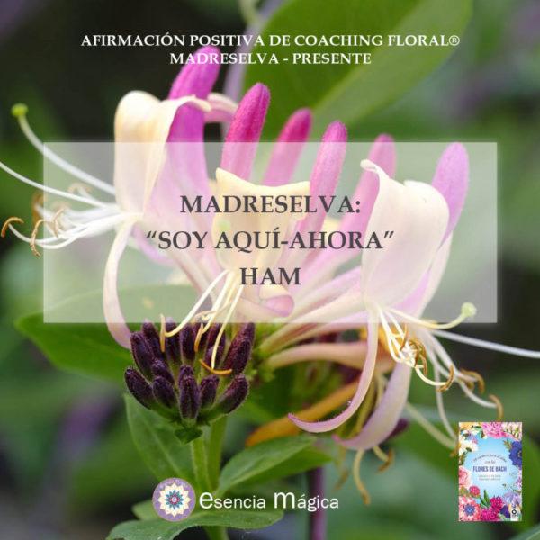 Afirmación positiva de Luz Pura Floral. Madreselva - Presente