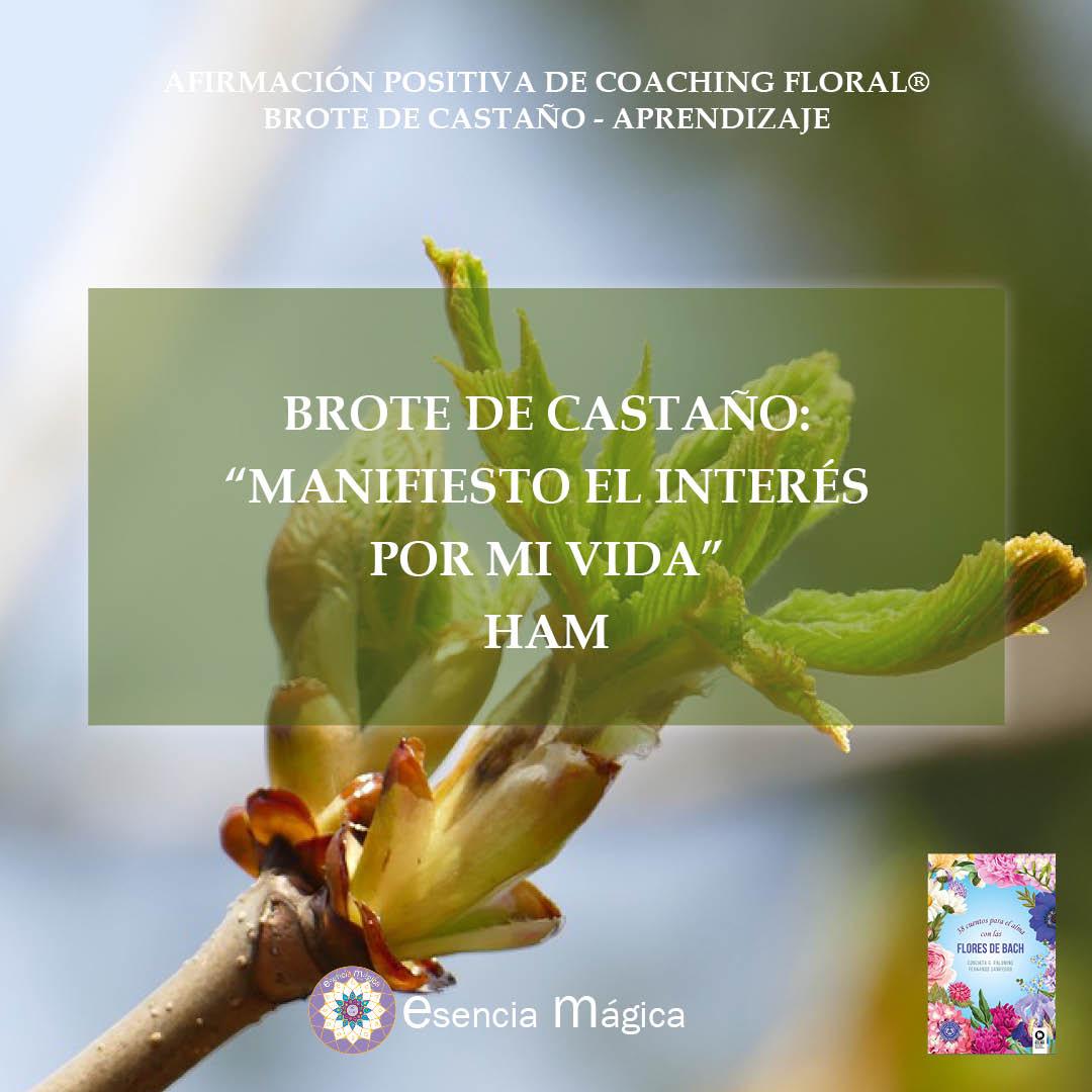 Afirmación positiva de Luz Pura Floral. Brote de Castaño-Aprendizaje
