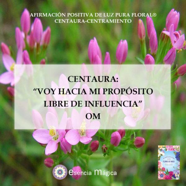 Afirmación positiva de Luz Pura Floral. Centaura-Centramiento