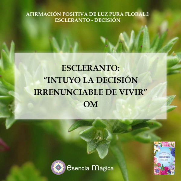 Afirmación positiva de Luz Pura Floral. Escleranto-Decisión