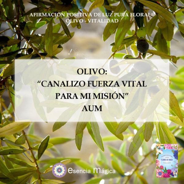 olivo aum