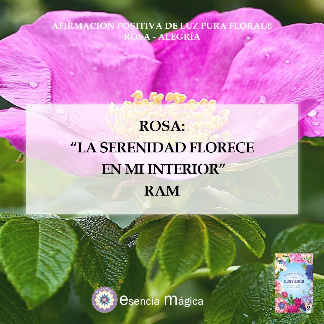 rosa alegría afirmación positiva de Luz Pura Floral