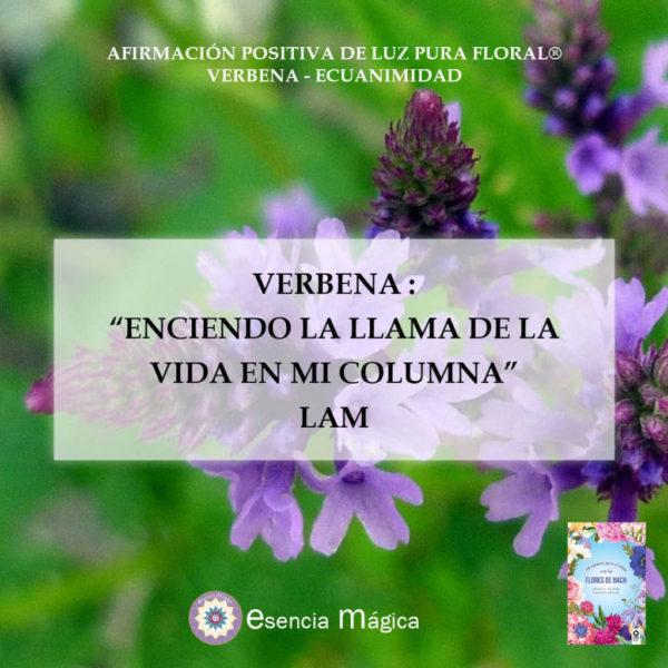 Afirmación positiva de Luz Pura Floral. Verbena-Ecuanimidad