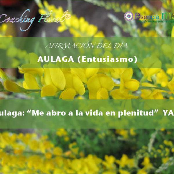 Afirmación positiva de Luz Pura Floral. Aulaga - Entusiasmo