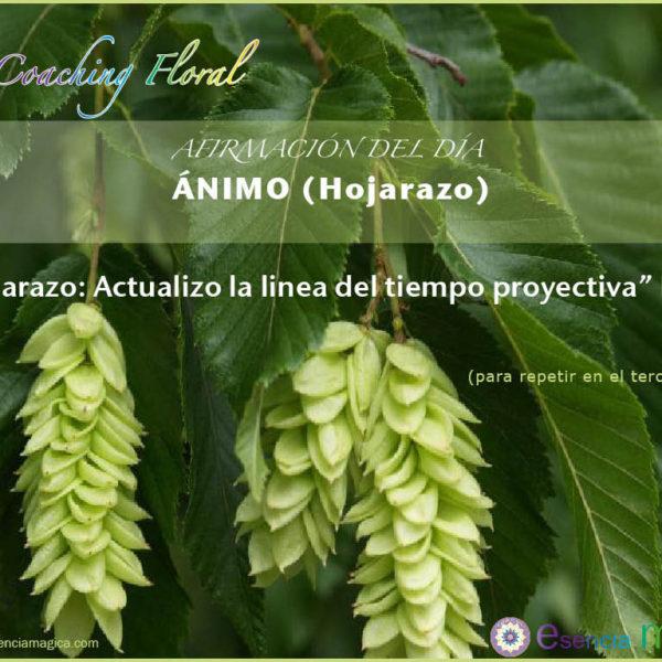 Afirmación del día de Luz Pura Floral. Hojarazo-Ánimo