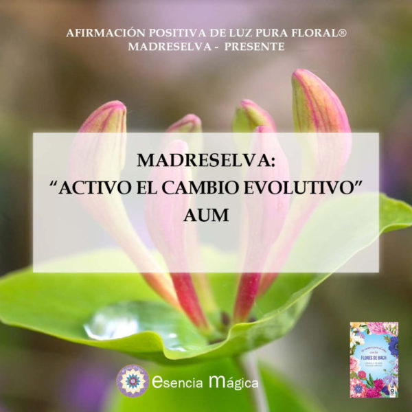 madreselva aum