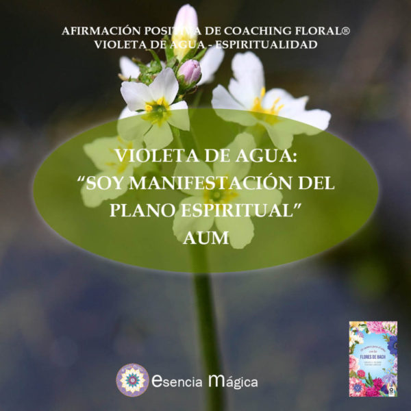 Afirmación positiva de Luz Pura Floral. Violeta de Agua-Espiritualidad