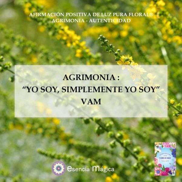 Afirmación positiva de Luz Pura Floral. Agrimonia-Autenticidad