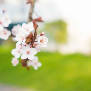 flors-de-bach-coaching-floral