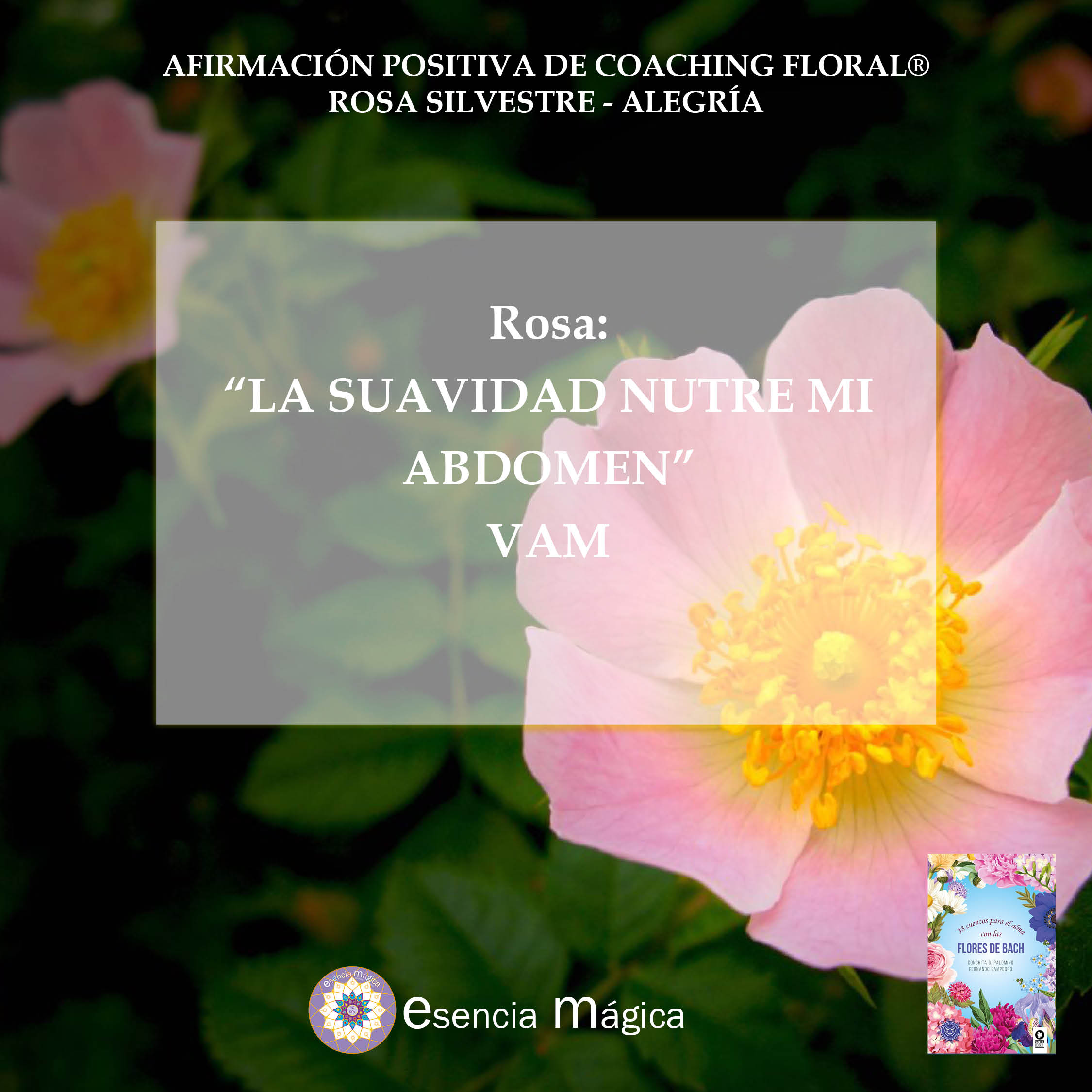 Afirmación positiva de Luz Pura Floral. Rosa - Alegría