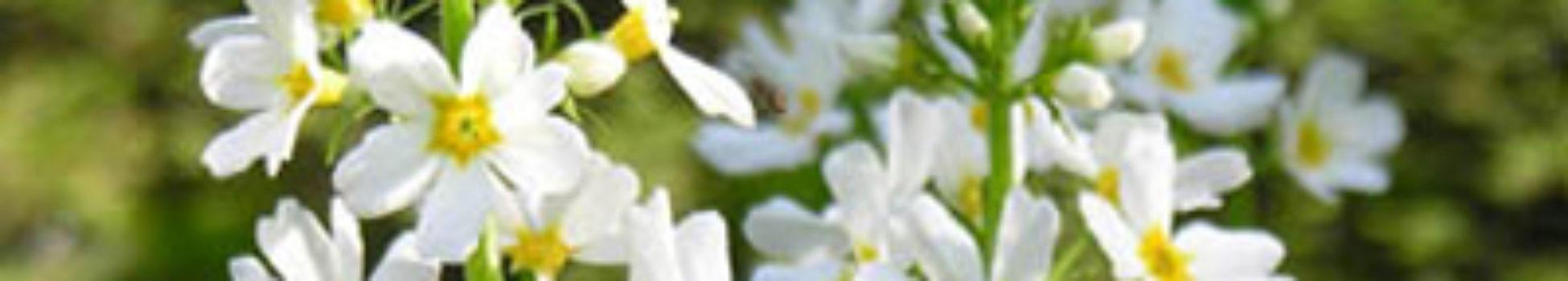 Luz Pura Floral Violeta de Agua-Espiritualidad. Curso online