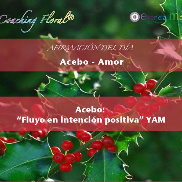 ACEBO yam