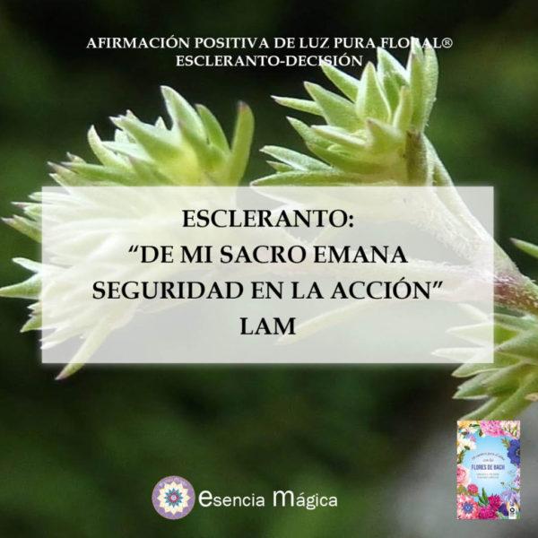 ESCLERANTO LAM