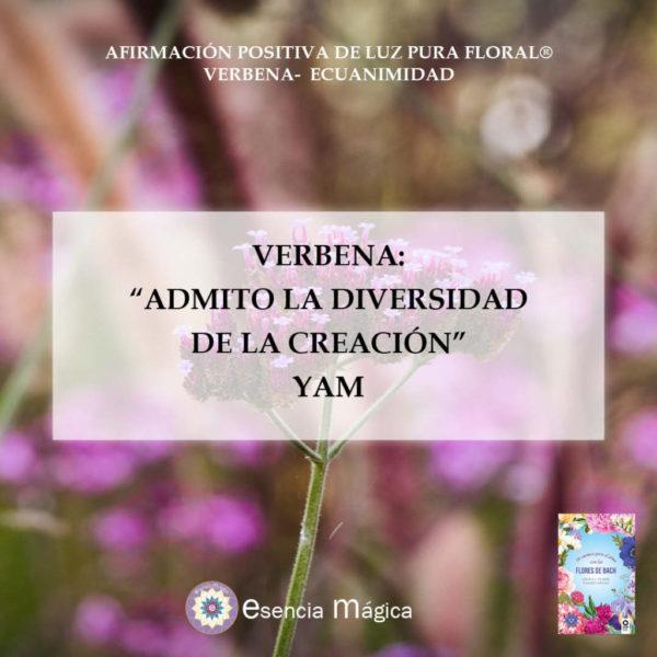 verbena yam