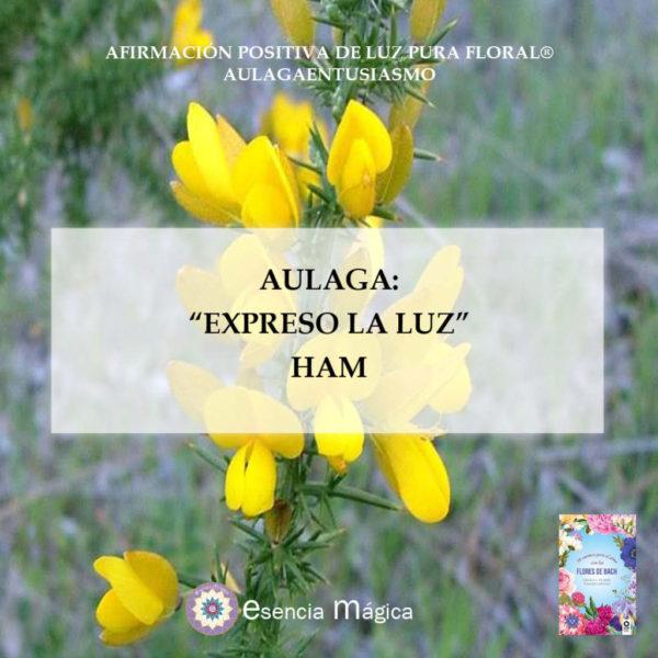 Afirmación positiva de Luz Pura Floral. Aulaga-Entusiasmo