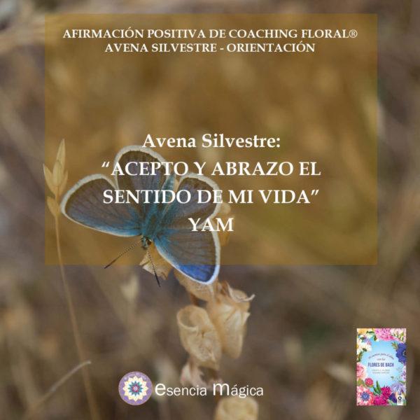 Afirmación positiva de Luz Pura Floral. Avena Silvestre-Orientación