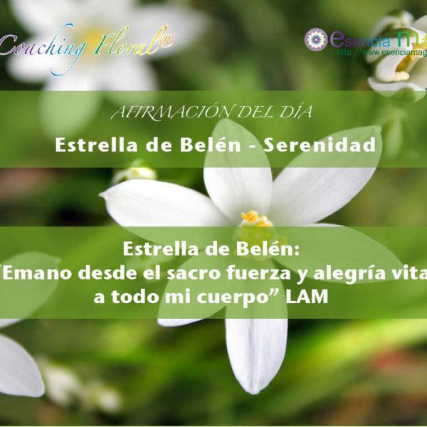 Afirmación positiva de Luz Pura Floral. Estrella de Belén-Serenidad