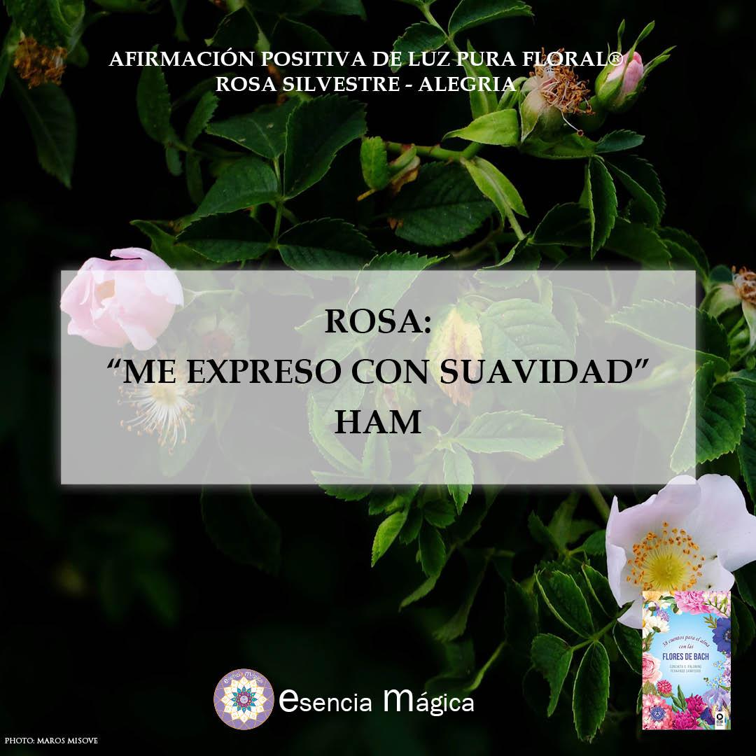 Afirmación positiva de Luz Pura Floral. Rosa-Alegría