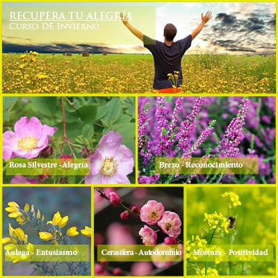 flores alégrate