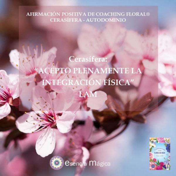Afirmación positiva de Luz Pura Floral. Cerasífera-Autodominio