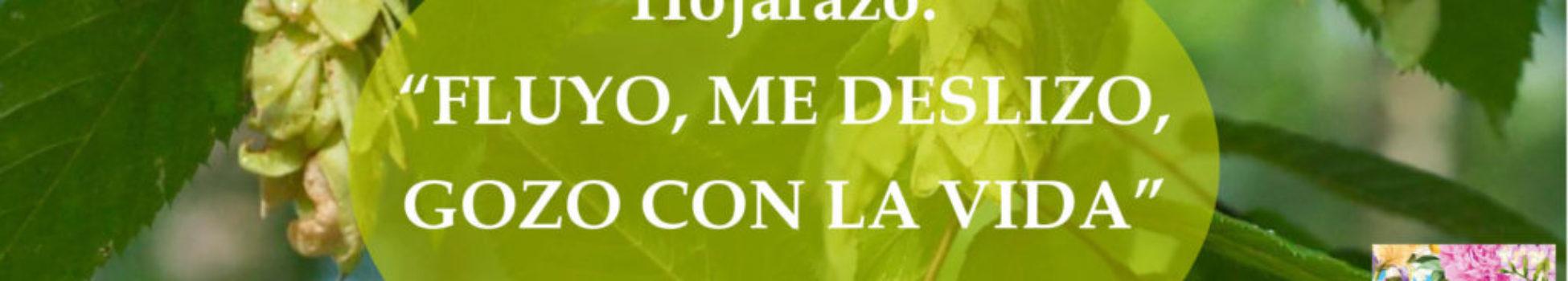 Afirmación positiva de Luz Pura Floral. Hojarazo- Ánimo