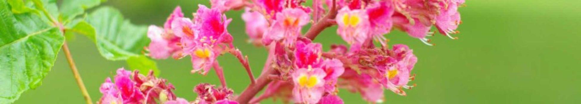 Luz Pura Floral Castaño Rojo-Independencia. Curso Online