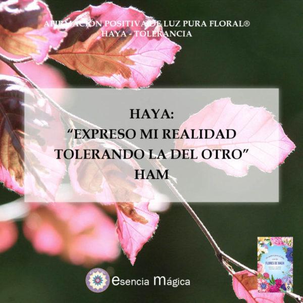 Afirmación positiva de Luz Pura Floral. Haya-Tolerancia