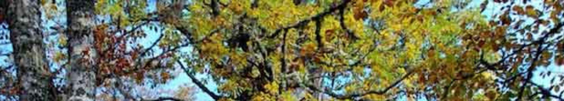 roble curso online flores de Bach