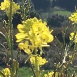 CABECERA-TELARES-ABRIL