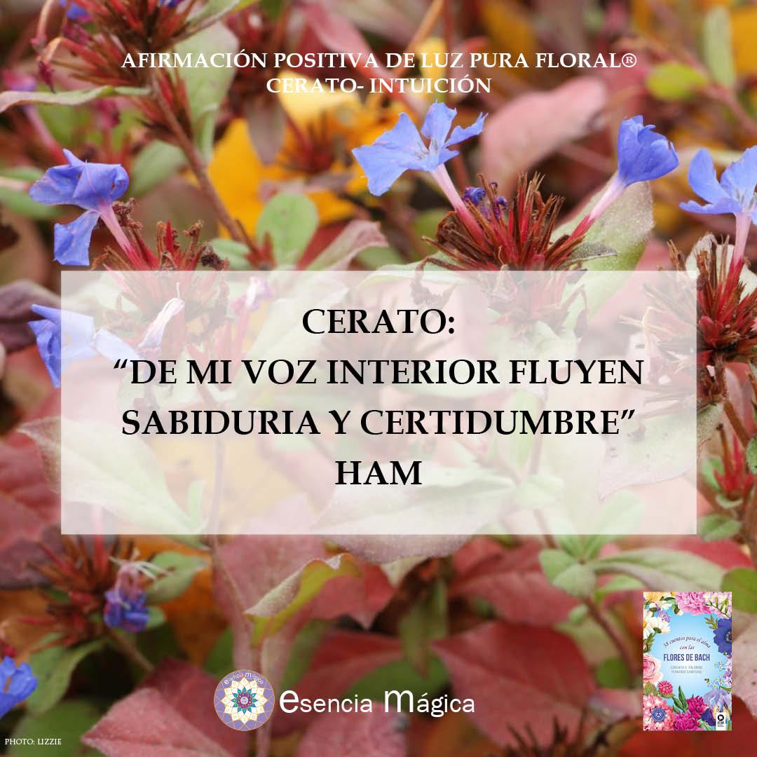 Afirmación positiva de Luz Pura Floral. Cerato-Intuición