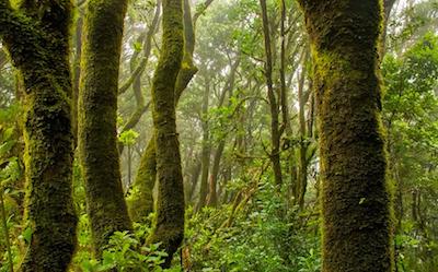 bosque- frenar devastación