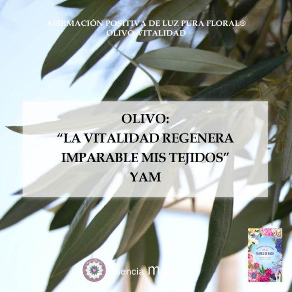 olivo yam