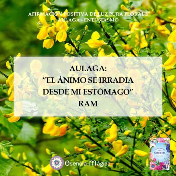 Afirmación positiva de Luz Pura Floral. Aulaga-Positividad