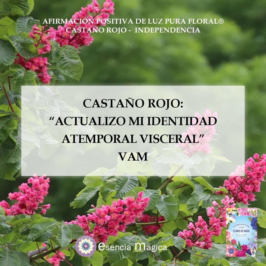 Afirmación positiva de Luz Pura Floral. Castaño Rojo-Independencia
