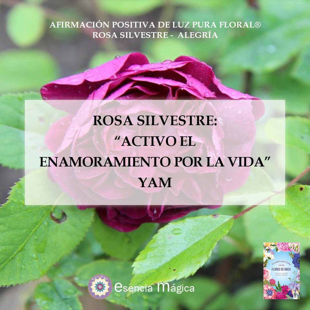 rosa alegría afirmación positiva