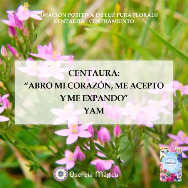 Afirmación positiva de Luz Pura Floral. Centaura-Realización