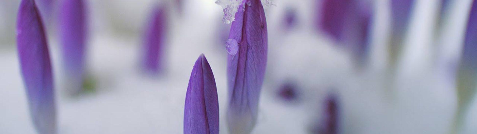 marzo-telares-miniatura