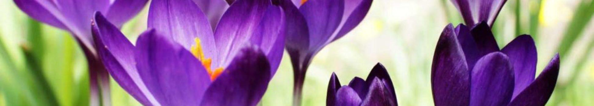 abril-telares-mimiatura