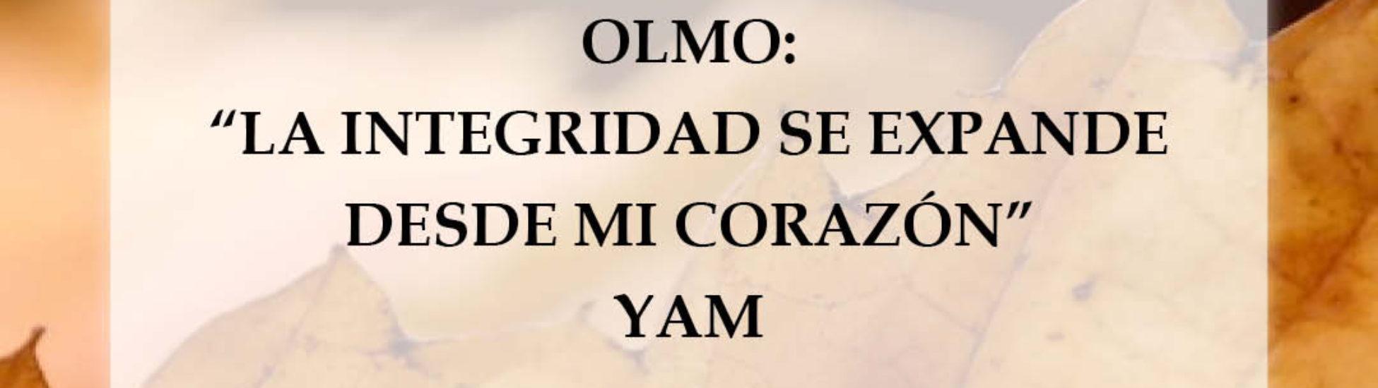 olmo yam