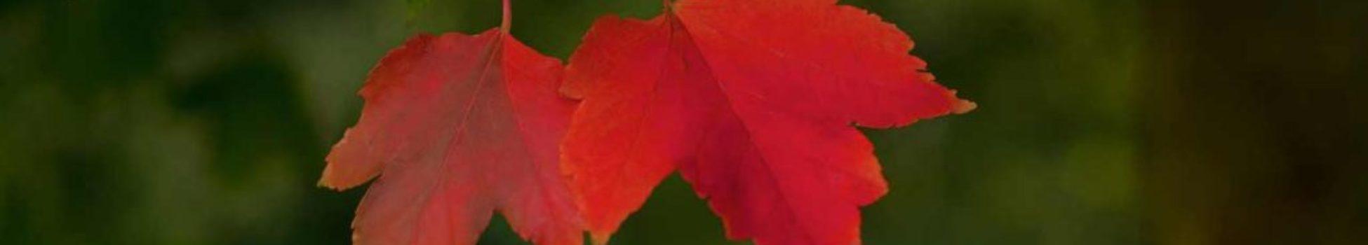 telares-noviembre-miniatura