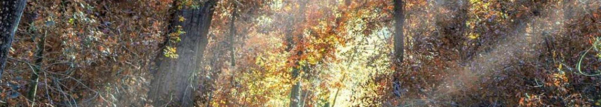 telares-octubre-miniatura