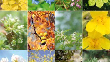 mosaico-flores-de-Bach