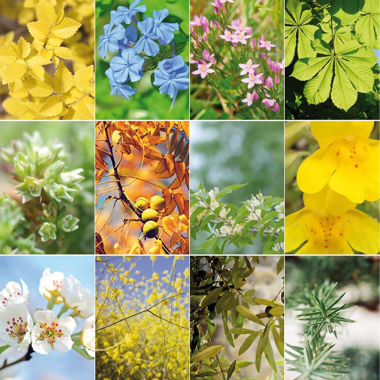 Luz Pura Floral Online
